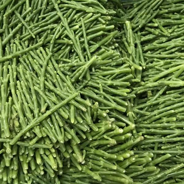 "Passepierre/Salicornia ""Algen"""