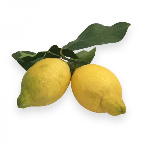 Zitrone Amalfi unbehandelt mit Blatt Italien DE-NW-2901216