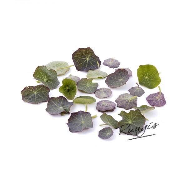 Micro Kapuzinerblätter