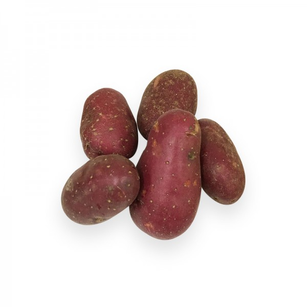 Kartoffel Cheyenne