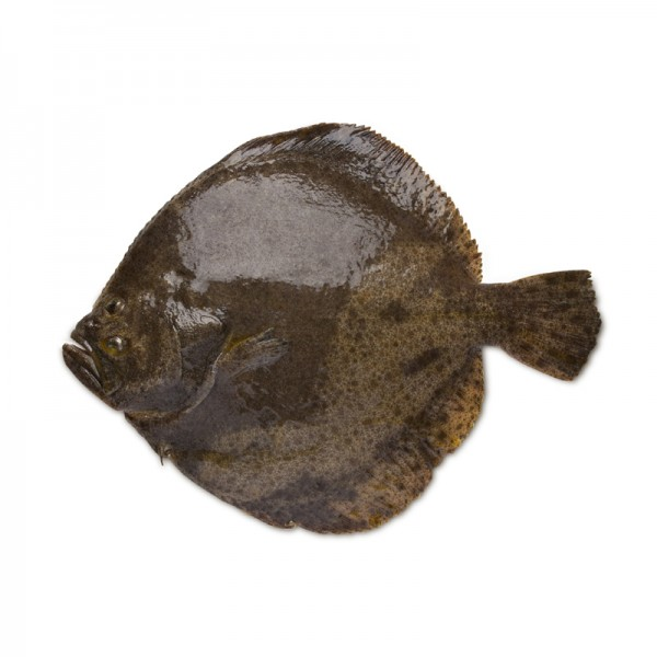Steinbutt ausgenommen, 2-3 kg