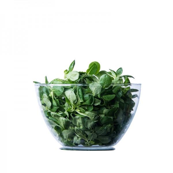 Feldsalat, gewaschen