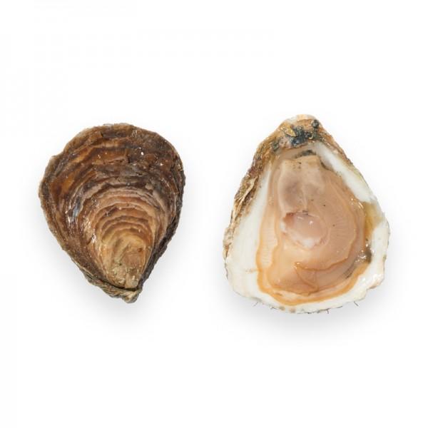 Belon 00 / ostrea edulis 50 Stk Frankreich