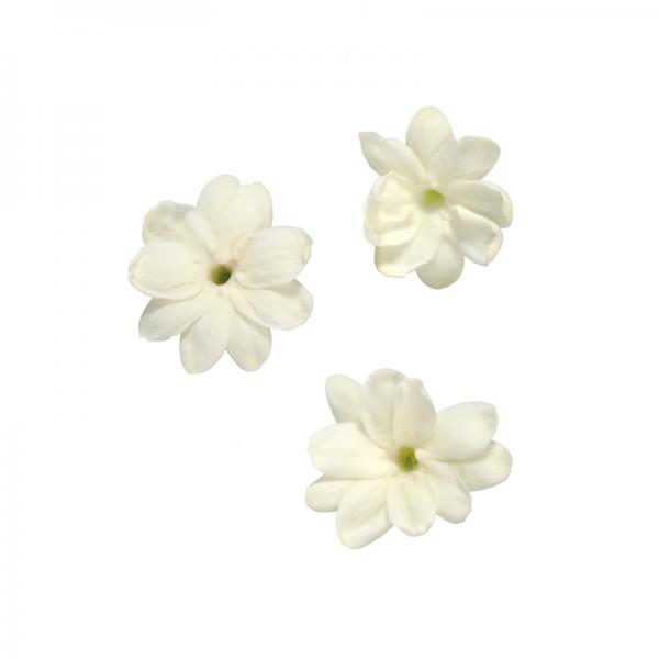 Jasmin Blüten von Koppert