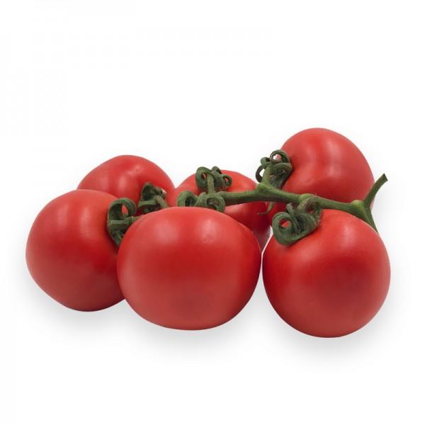 Tomaten am Zweig