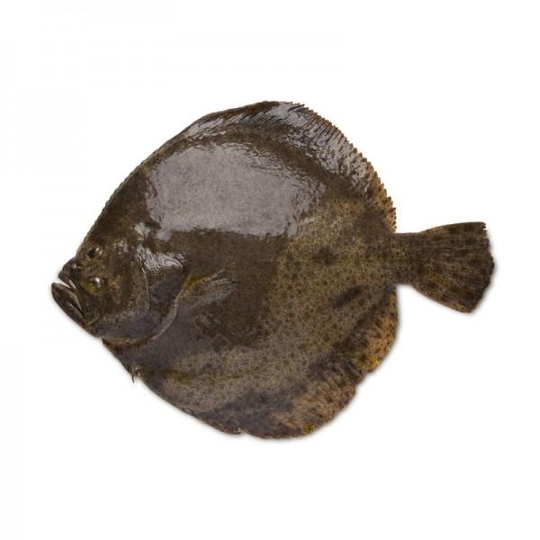 Steinbutt ausgenommen, 0,8-1 kg
