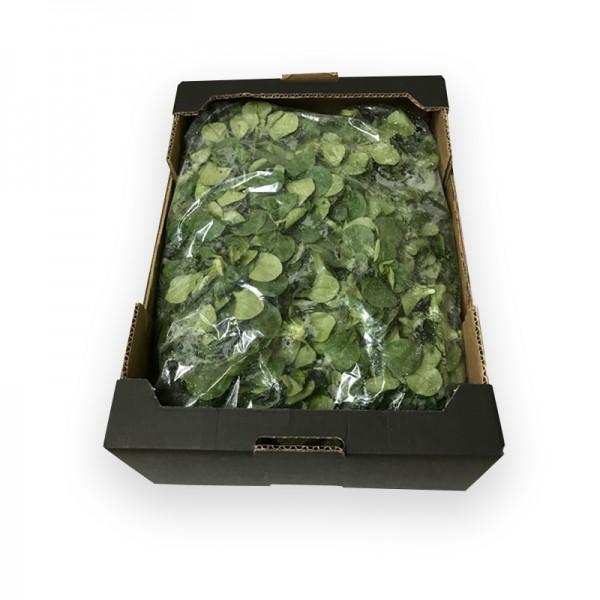 Feldsalat gewaschen 1kg aus DE Bodensee