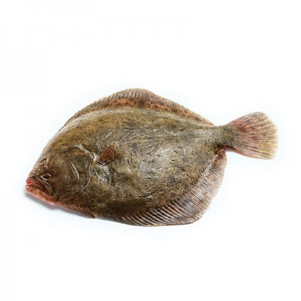 Steinbutt gezüchtet, .1-1,5 kg