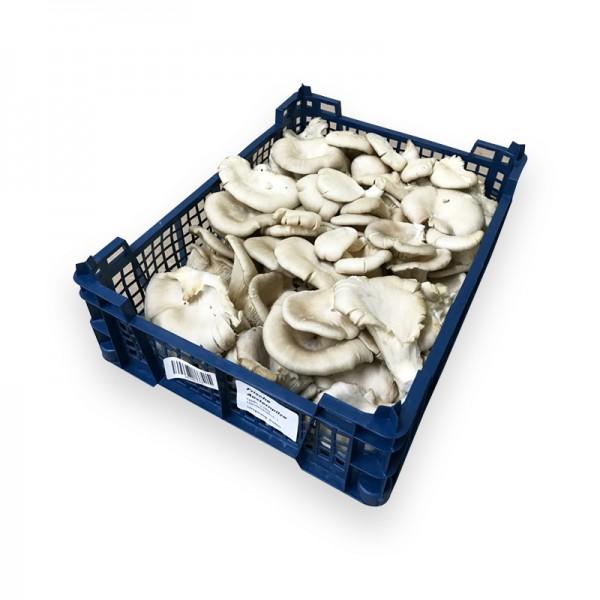 Austernpilzkappen 2kg aus PO