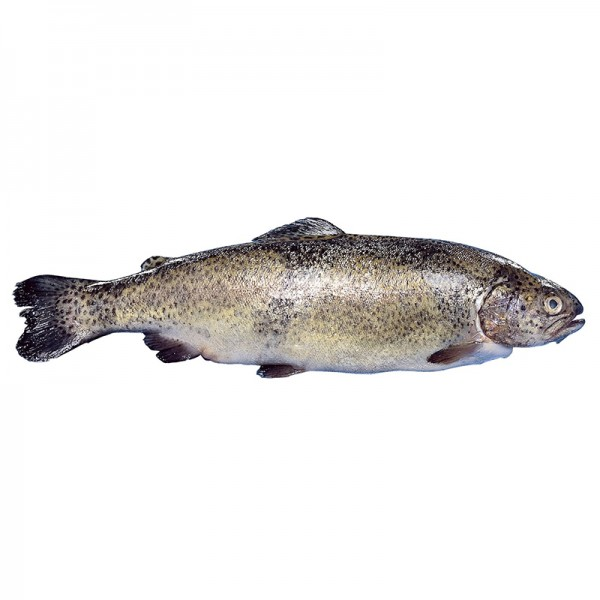 Fjordforelle, 4-5kg, ausgenommen