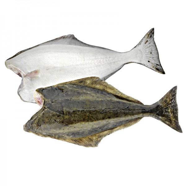 Heilbutt weiß, ohne Kopf, 20-40kg
