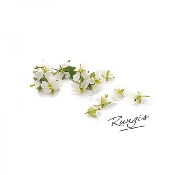 Wasabiraukeblüten