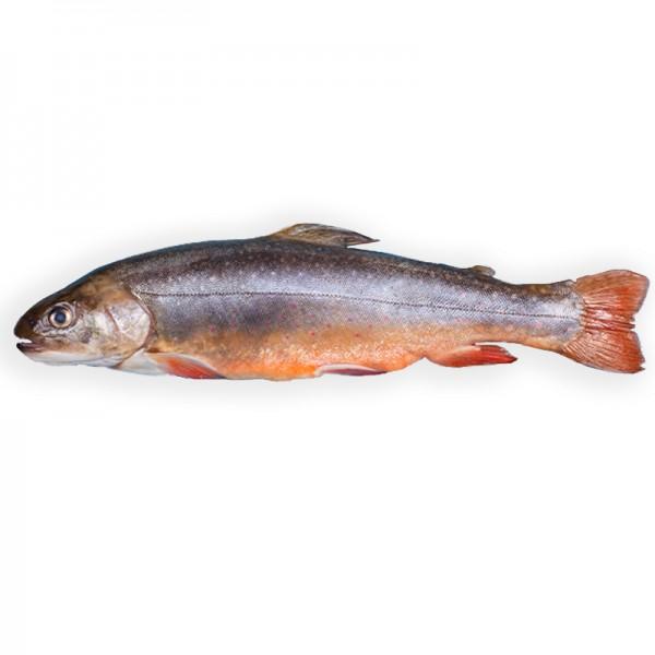 Seesaibling, 1-2kg, ausgenommen, Island