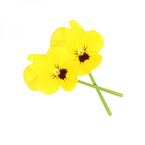 """Cornabria Blossom """"essbare Blüten"""" von Koppert"""