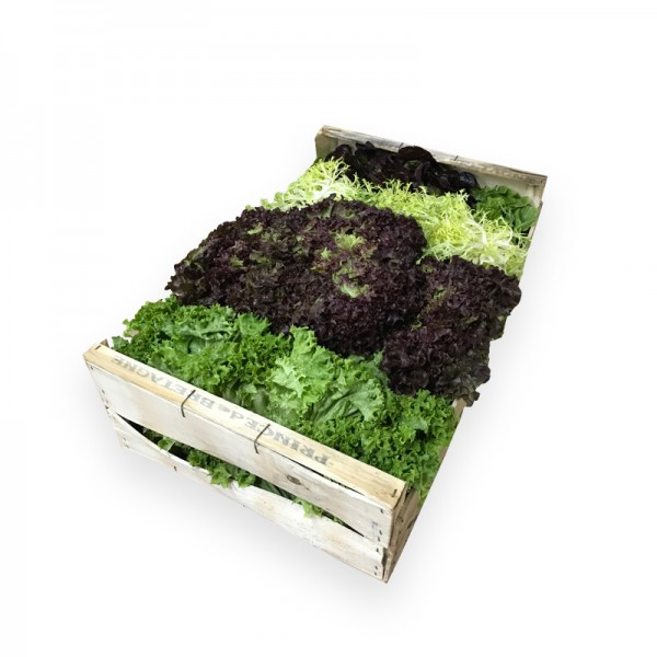 Salatsortiment mit Frisee