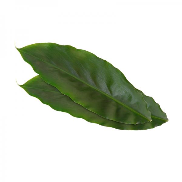 Kardamom Blätter voin Koppert