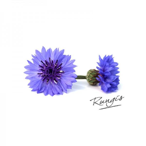 Kornblumen, blau
