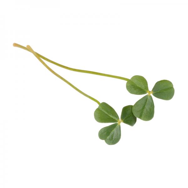 """Citra Leaves """"essbares Blatt"""" von Koppert"""