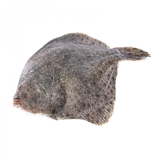 Steinbutt rund gezüchtet ca. 1-1,5 kg