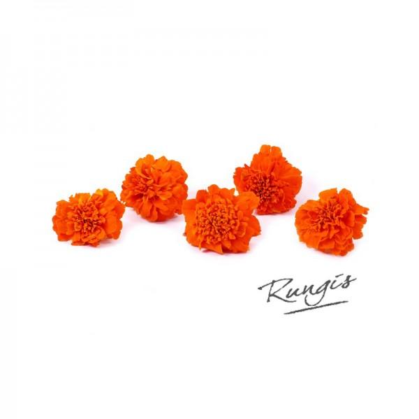 Tagetesblüten Afrikaantjes orange